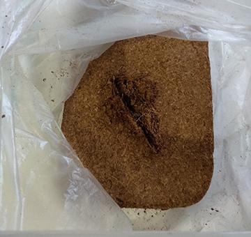 режем кокосовый кирпич