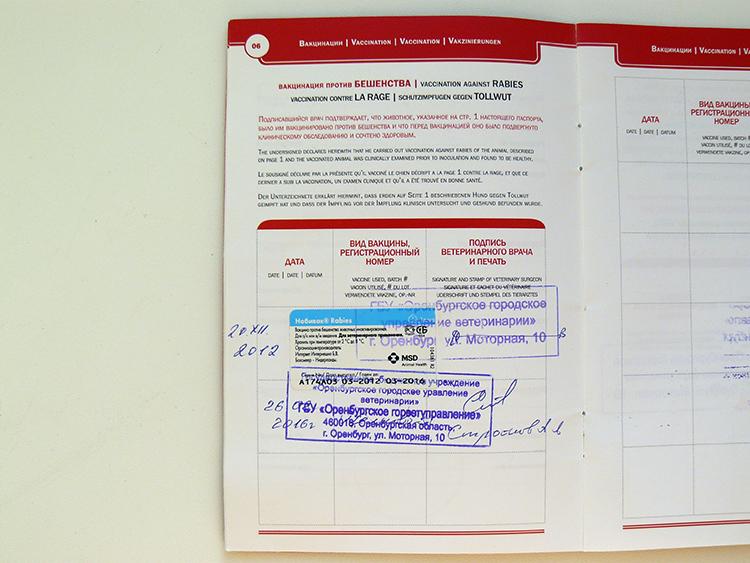 ветеринарный паспорт с отметкой о прививках