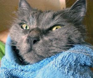 сушка в полотенце
