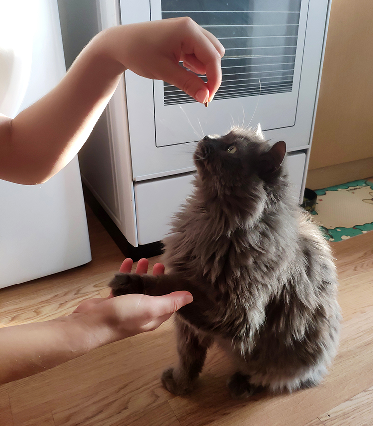 кот дал лапу