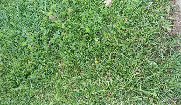 бег по траве
