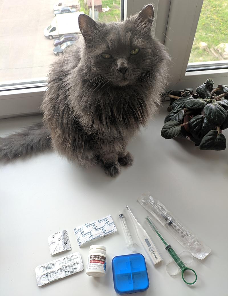 кот с аптечкой