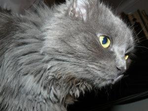 глаза котика