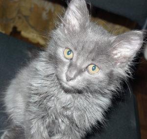 котенок до 6 месяцев