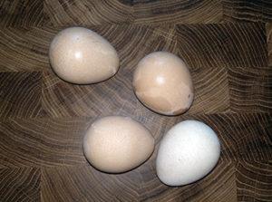 цесариные яйца - фото